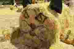 DSC04512