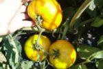Уникальное предложение-собирайте овощи прямо с поля и получайте скидки!