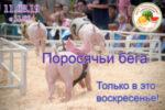 11 08 19 — Поросячьи бега на бахче Пономаревых